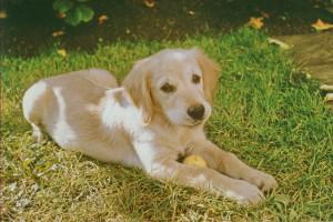 Ronja - unser erster Hund